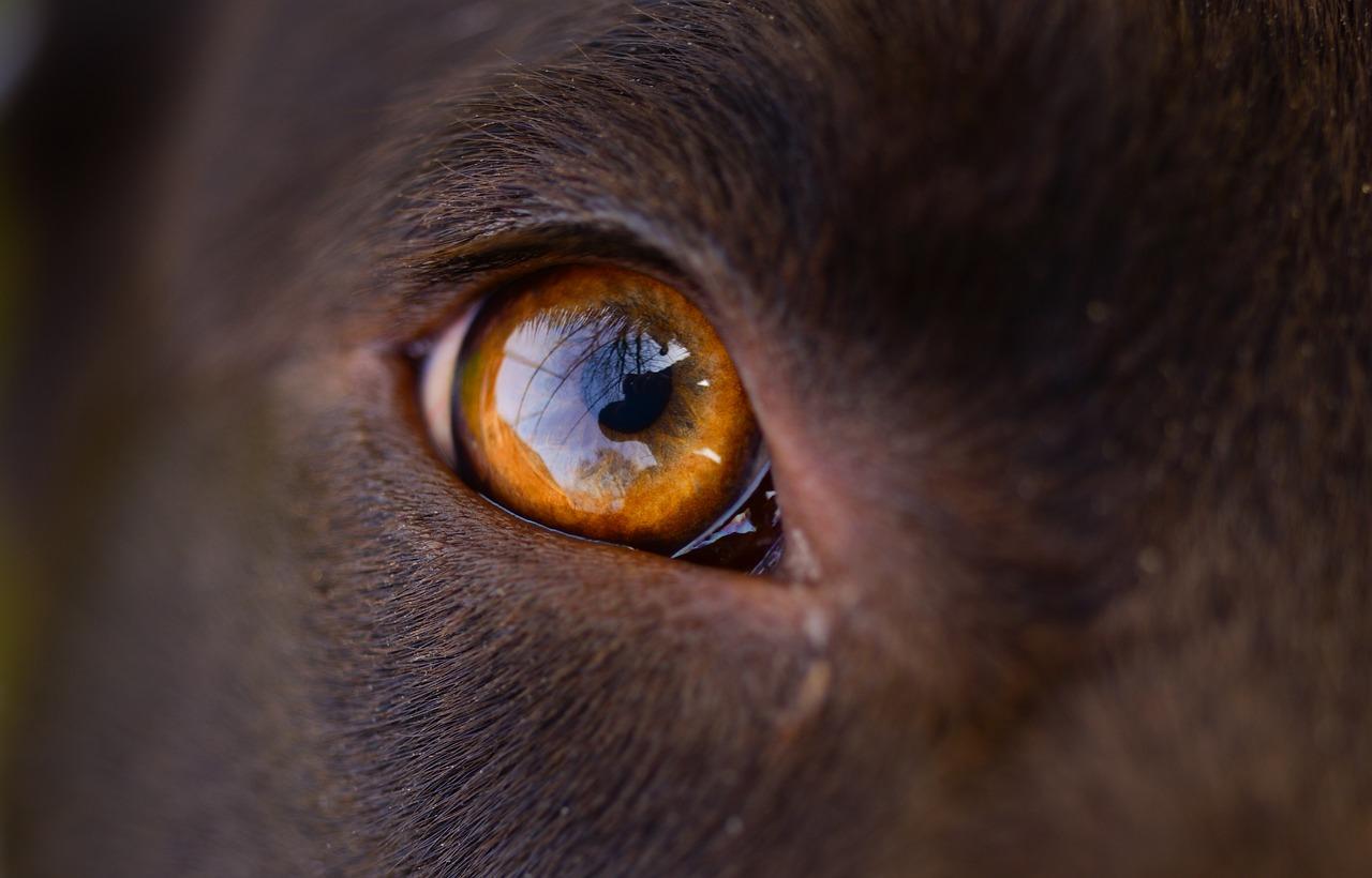 Koirat voivat aistia hämmästyttäviä asioita, joita me emme voi